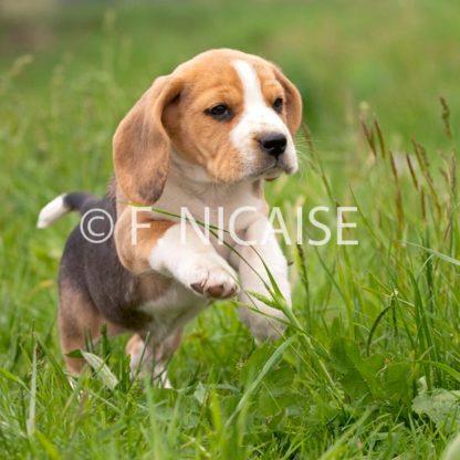 Beagle - 07/2019