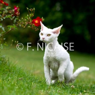 Cats - 07/2019