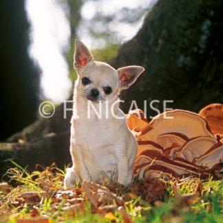Chihuahua - 12/2019