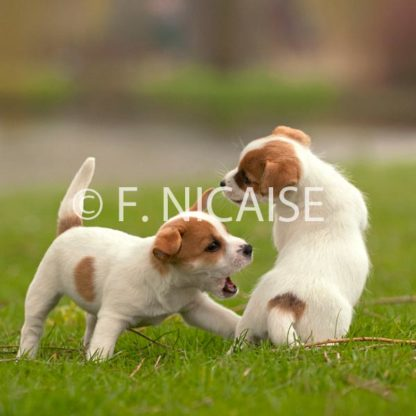 Puppies - 04/2019