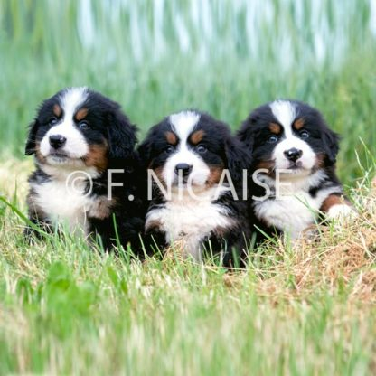 Puppies - 06/2019