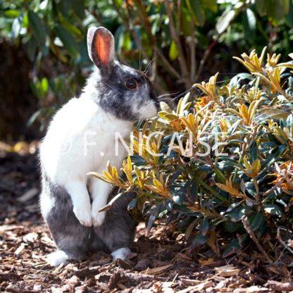 Rabbits - 10/2019