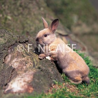 Rabbits - 02/2019