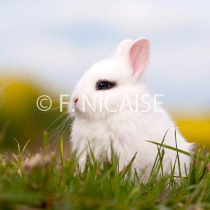 Rabbits - 05/2019