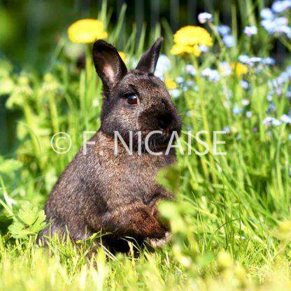 Rabbits - 06/2019