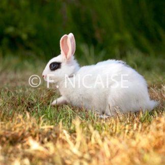 Rabbits - 09/2019