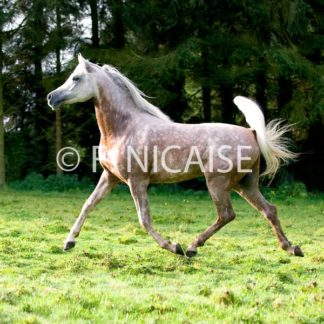 Horses - 01/2019