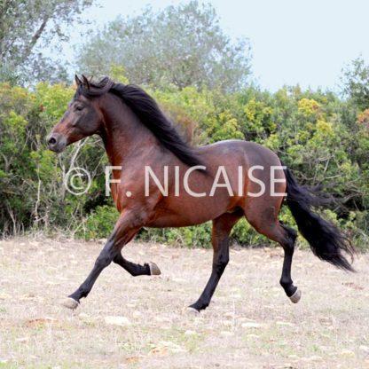 Horses - 11/2019