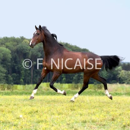 Horses - 04/2019