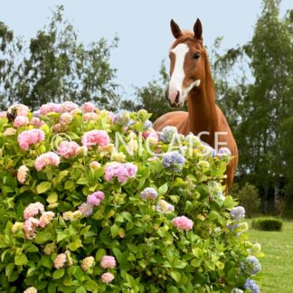 Horses - 06/2019