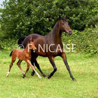 Horses - 07/2019