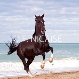 Horses - 08/2019
