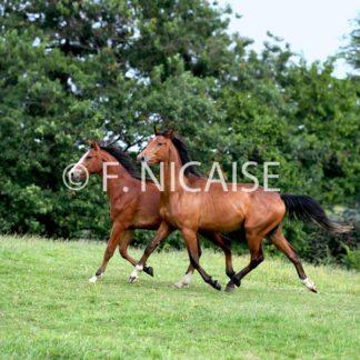 Horses - 09/2019