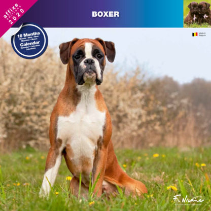 Calendrier Boxer 2020