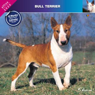 Calendrier Bull Terrier 2020