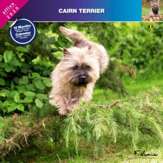 Calendrier Cairn Terrier 2020