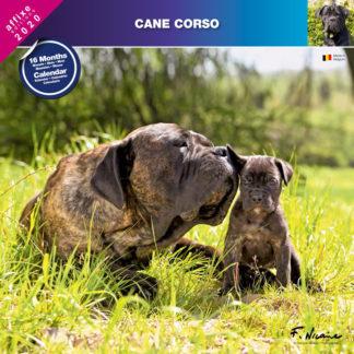 Calendrier Cane Corso 2020