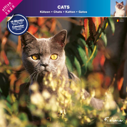 Calendrier Cats 2020
