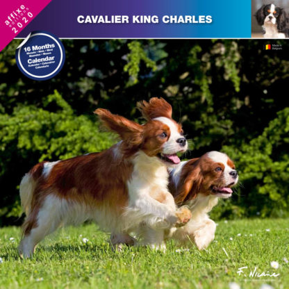 Calendrier Cavalier King Charles 2020