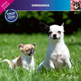 Calendrier Chihuahua 2020