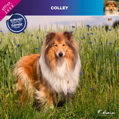 Calendrier Colley 2020