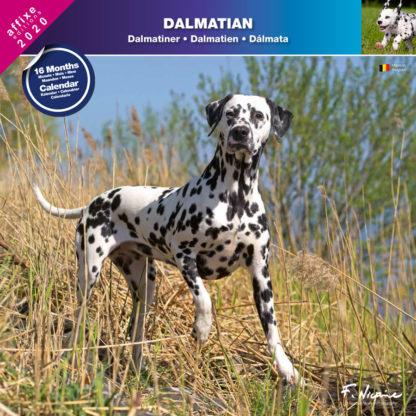 Calendrier Dalmatian 2020