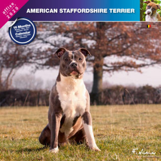 Calendrier American Staffordshire Terrier 2020