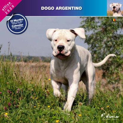 Calendrier Dogo Argentino 2020