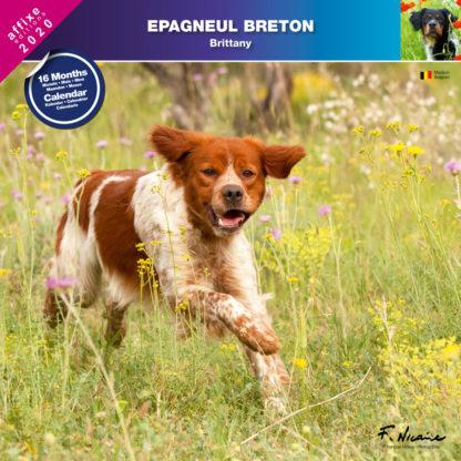 Calendrier Epagneul Breton 2020