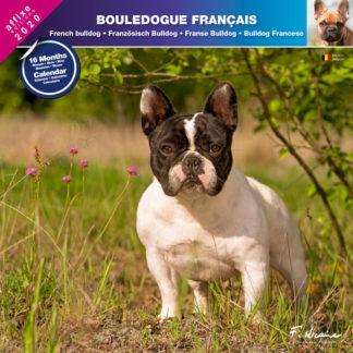 Calendrier Bouledogue français 2020