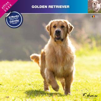 Calendrier Golden Retriever 2020