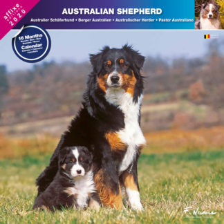 Calendrier Australian Shepherd 2020
