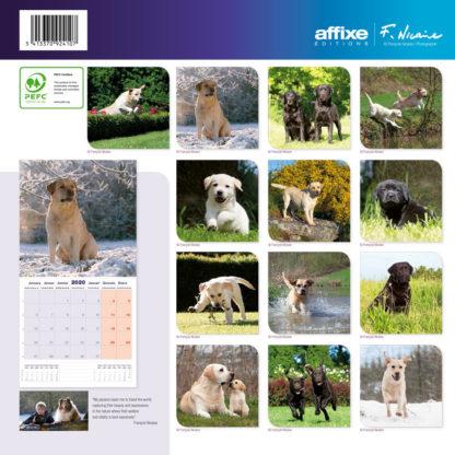 Calendrier Labrador 2020