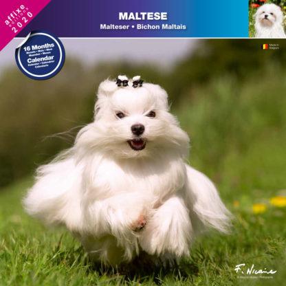 Calendrier Maltese 2020