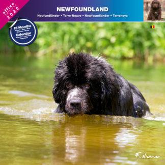 Calendrier Newfoundland 2020