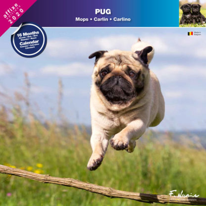 Calendrier Pug 2020
