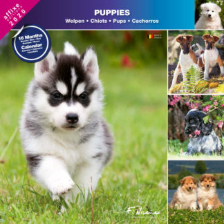 Calendrier Puppies 2020