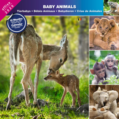 Calendrier Baby Animals 2020