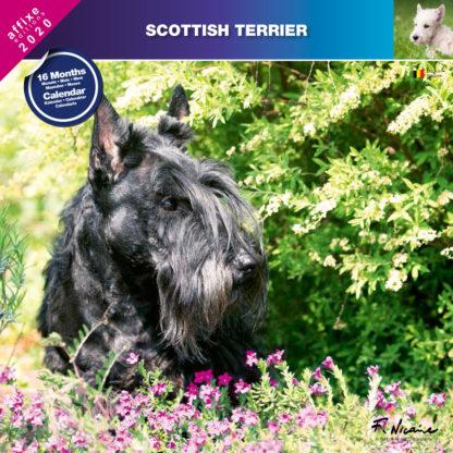 Calendrier Scottish Terrier 2020