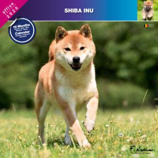 Calendrier Shiba Inu 2020