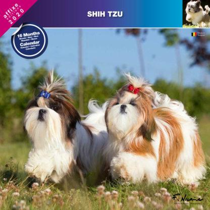Calendrier Shih Tzu 2020