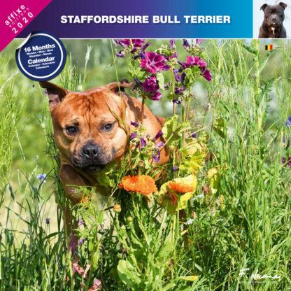 Calendrier Staffordshire Bull Terrier 2020