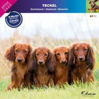 Calendrier Teckel 2020