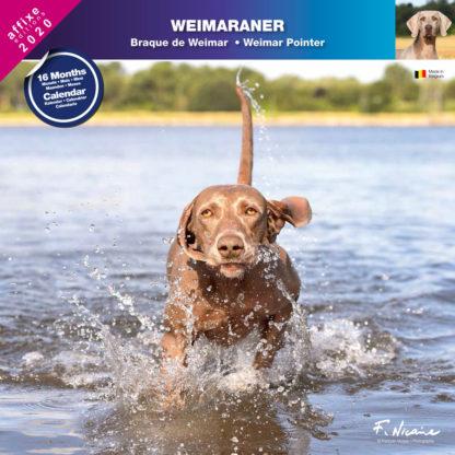 Calendrier Weimaraner 2020
