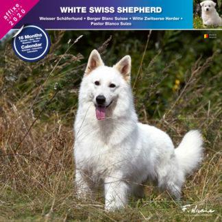 Calendrier White Swiss Shepherd 2020
