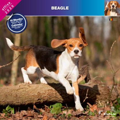 Calendrier Beagle 2020