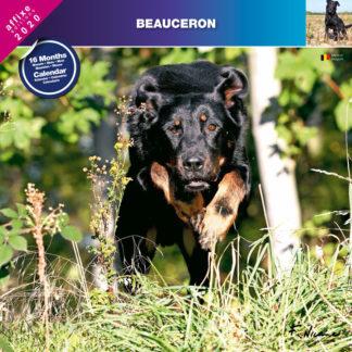 Calendrier Beauceron 2020