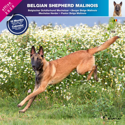 Calendrier Belgian Shepherd Malinois 2020