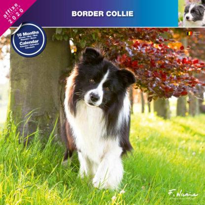 Calendrier Border Collie 2020