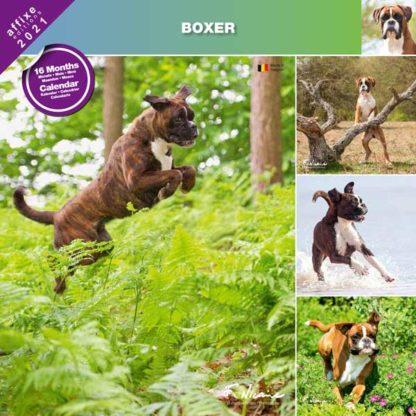 Calendrier Boxer 2021
